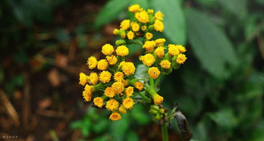 Picture of the day: Yellow Flora